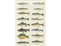 アンティーク風サインプレート 色とりどりの魚たち 30x20cm【カラー・グリーン】【カラー・イエロー】